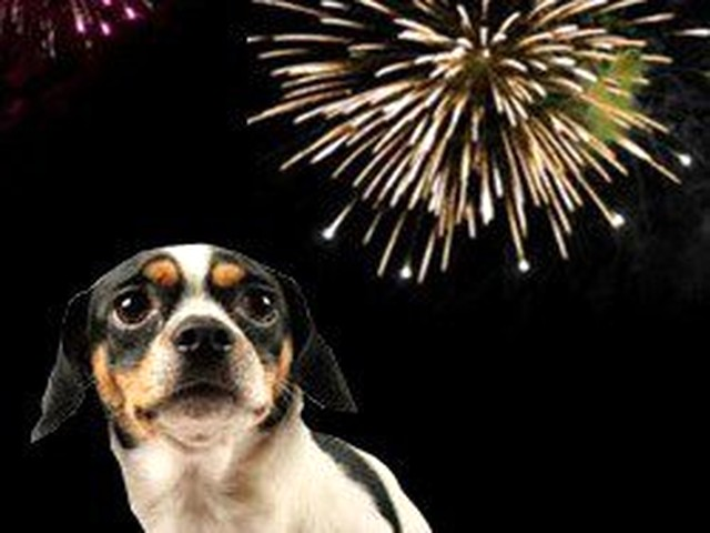 Dogs and fireworks, a bad combination