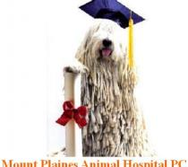 Mount Plaines Animal Hospital