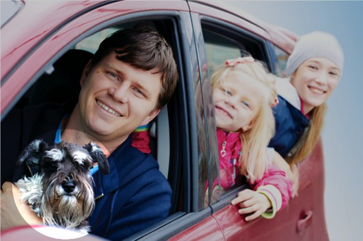 Tips for traveling by car with your pet