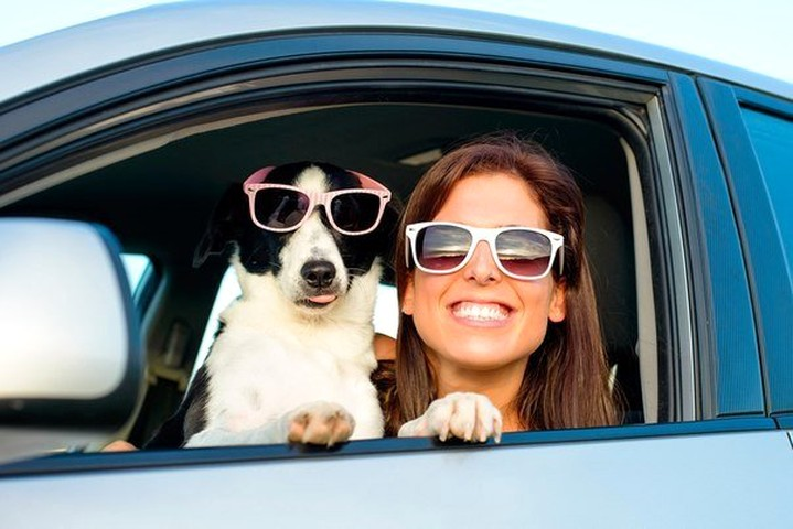 Traveling by car with your dog