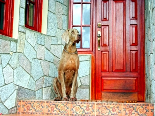 How to choose your watchdog: territorial aggression